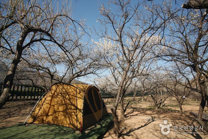 순매원에서의 캠핑