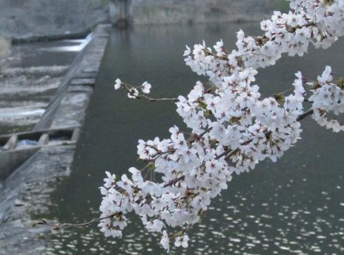 珠山春の花祭り(주산봄꽃축제)