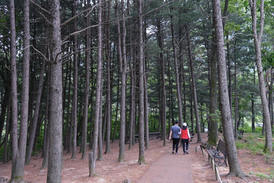 호젓하게 걷기 좋은 좌구산 숲길