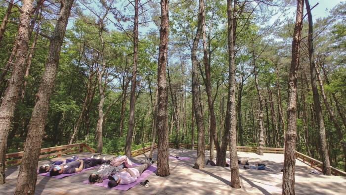 釜山 癒しの森(부산 치유의 숲)