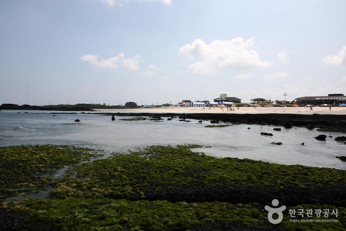 김녕성세기해변 (김녕해수욕장)