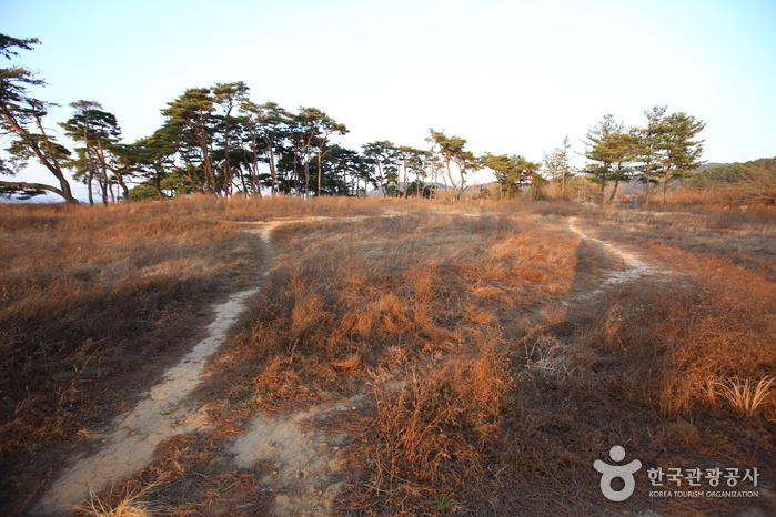 Brunnen Gyeongju Najeong (경주 나정)
