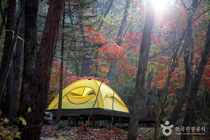 Bosque Recreativo Nacional del Monte Bangtaesan (국립 방태산자연휴양림)