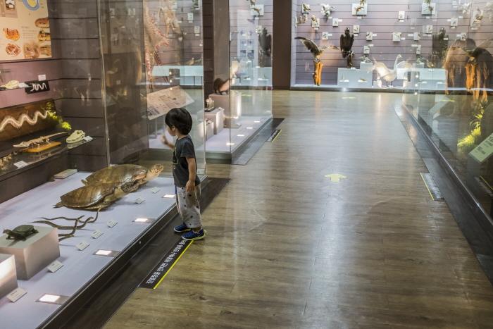 목포자연사박물관 내부