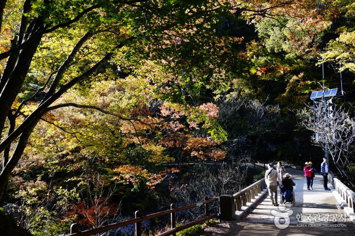가을 단풍이 들기 시작한 주왕산
