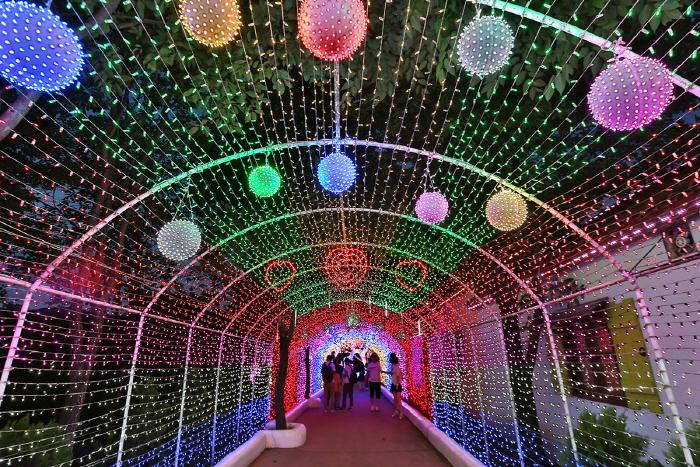 청도 프로방스 빛축제 2020
