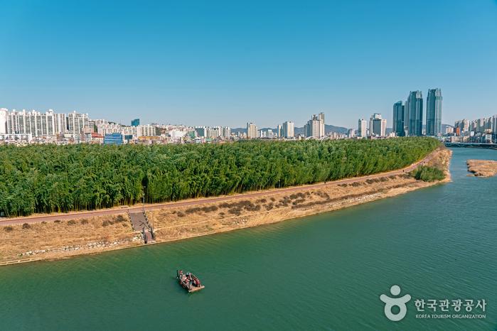太和江国家庭園(태화강 국가정원)