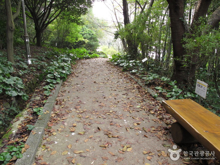 Halla Arboretum (한라수목원)
