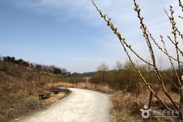 Upo Wetland (창녕 우포늪-생태공원)