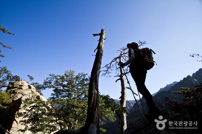 비선대 탐방안내소에서 금강굴 가는 길