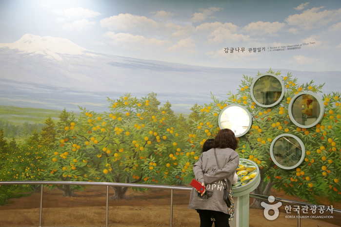 Seogwipo Citrus Museum (감귤박물관)