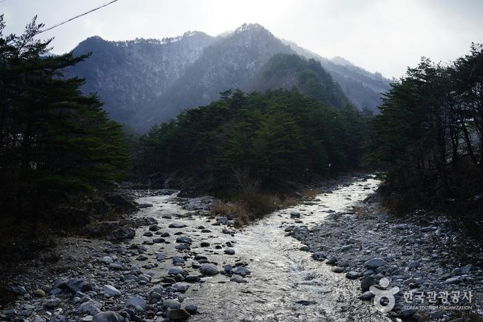 Erholungswald Micheongol (국립 미천골자연휴양림)