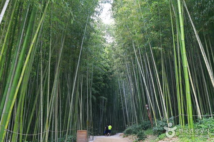 竹綠苑(죽녹원)8