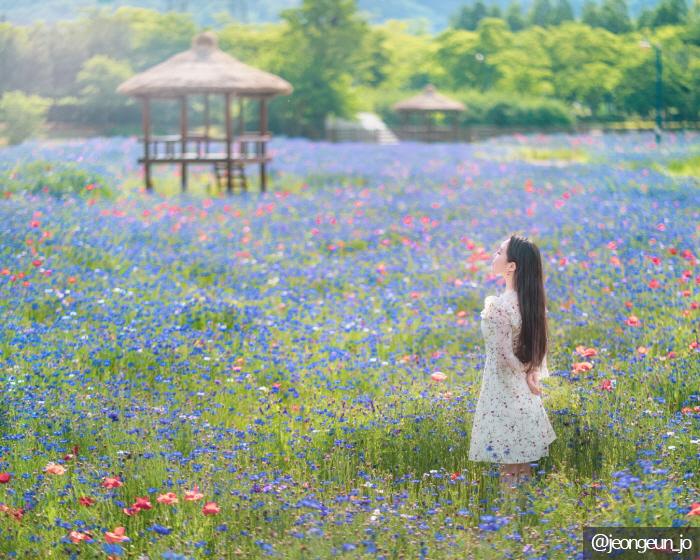 仁川大公園(인천대공원)