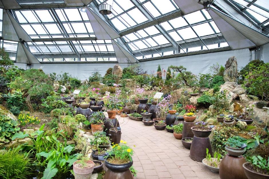 Wild Flower Exhibition of The Garden of Morning Calm (아침고요 야생화전시회)