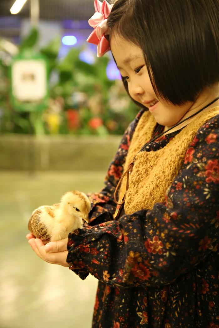 조심스레 두 손에 얹은 새끼 오리를 내려다 보는 어린이