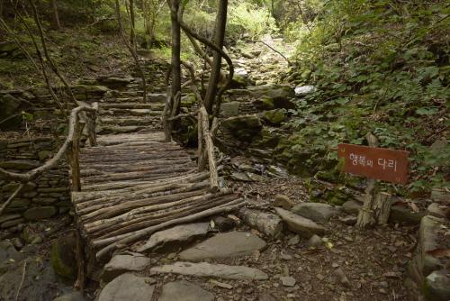 오두산 치유숲