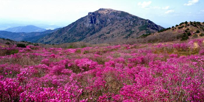 비슬산 참꽃문화제 2017