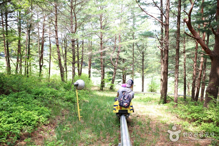 나는 여름에 스키장 간다! 용평리조트 레포츠 탐험