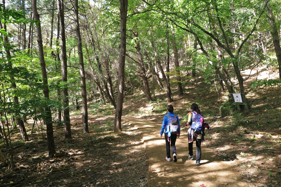 험준한 속리산에서 시종일관 완만한 숲길이 이어지는 세조길