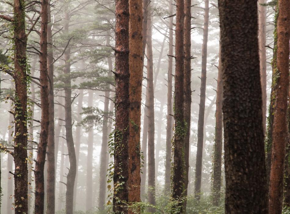 소나무 숲이 웅장한 대관령자연휴양림