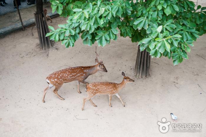 보행가교에서 바라본 사슴우리