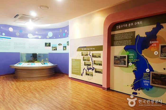 화천 토속어류생태체험관