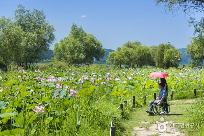 꽃과 그림이 있는 강가, 경기 양평 사진