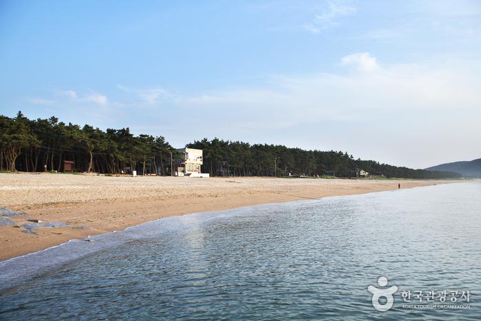 Gosapo Beach (고사포해수욕장)