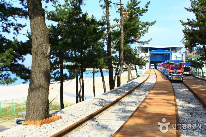 Samcheok Ocean Railbike ( )