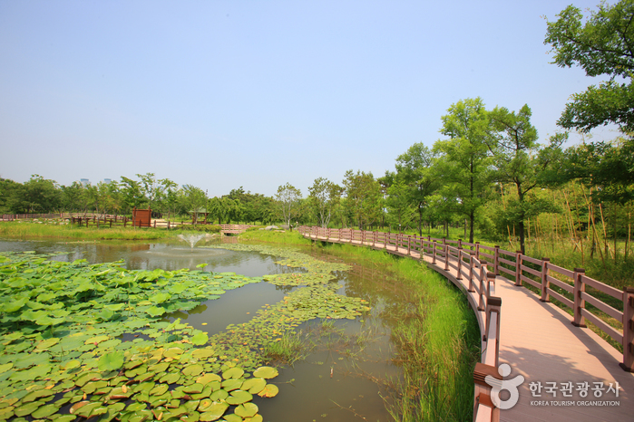 ハンバッ樹木園(한밭수목원)