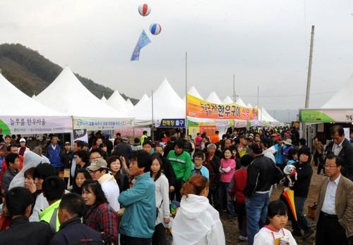 Hongcheon Ginseng Festival