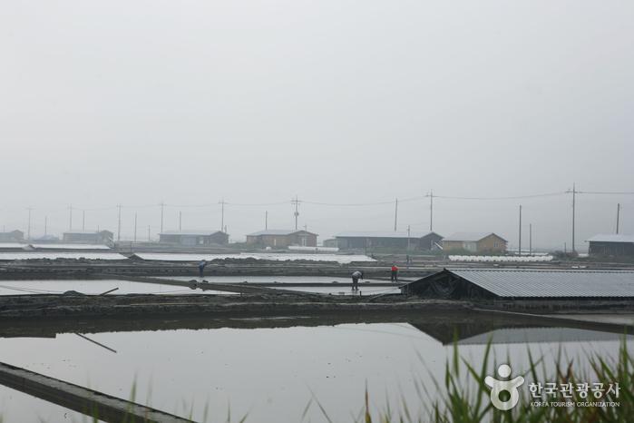 Taepyeong Salt Farm (태평염전)