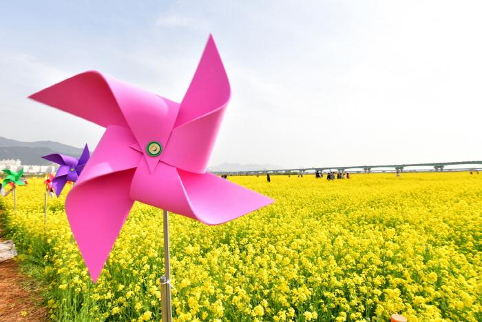 부산 낙동강 유채꽃축제 2019