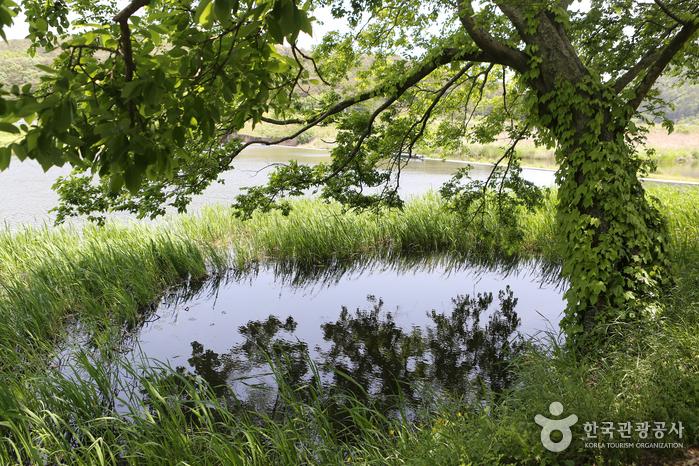 온통 초록빛으로 물든 숲정이