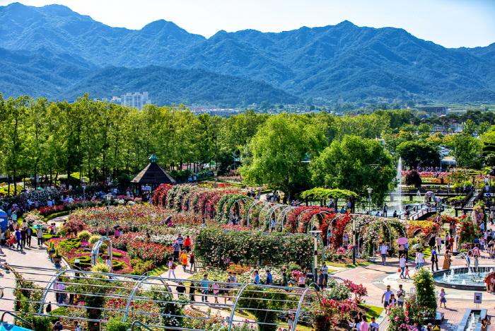 Международный фестиваль роз в уезде Коксон (곡성 세계장미축제)9