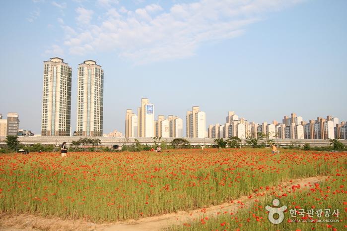 上洞湖公園(상동호수공원)