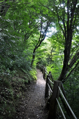 Jeju Jeolmul Recreational Forest (제주절물자연휴양림)