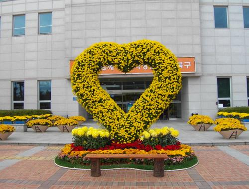 울산국화전시회 2018  사진