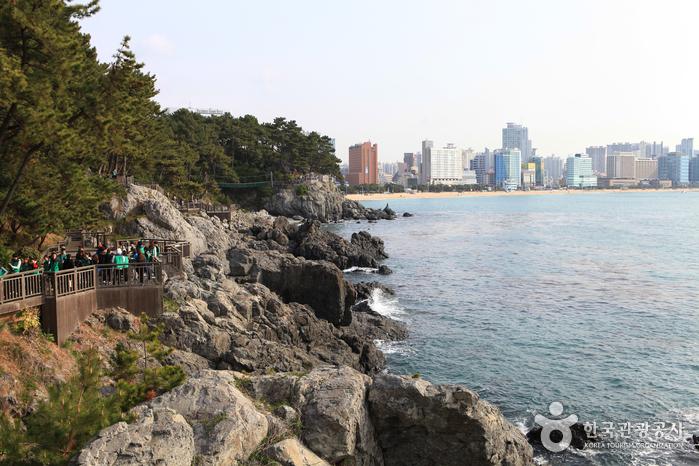 Haeundae Dongbaekseom Island (해운대 동백섬)