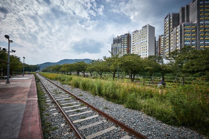 Дорога вишнёвых деревьев на станции Кёнхва (경화역 벚꽃길)12