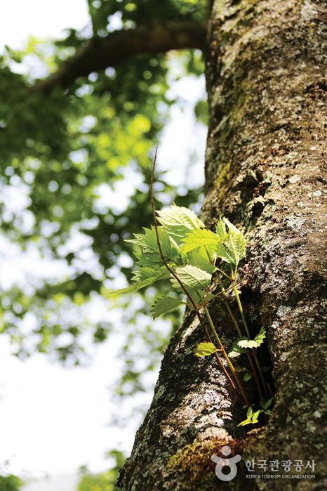 연둣빛 이파리가 나오고 있는 나무