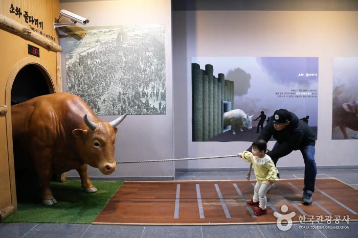 '음메~'황소 보러 봄나들이 오이소, 경북 청도 사진