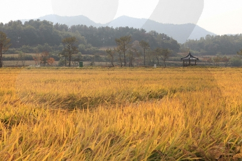 회룡포 마을