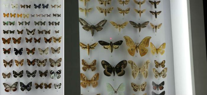 나비와 나방의 모습