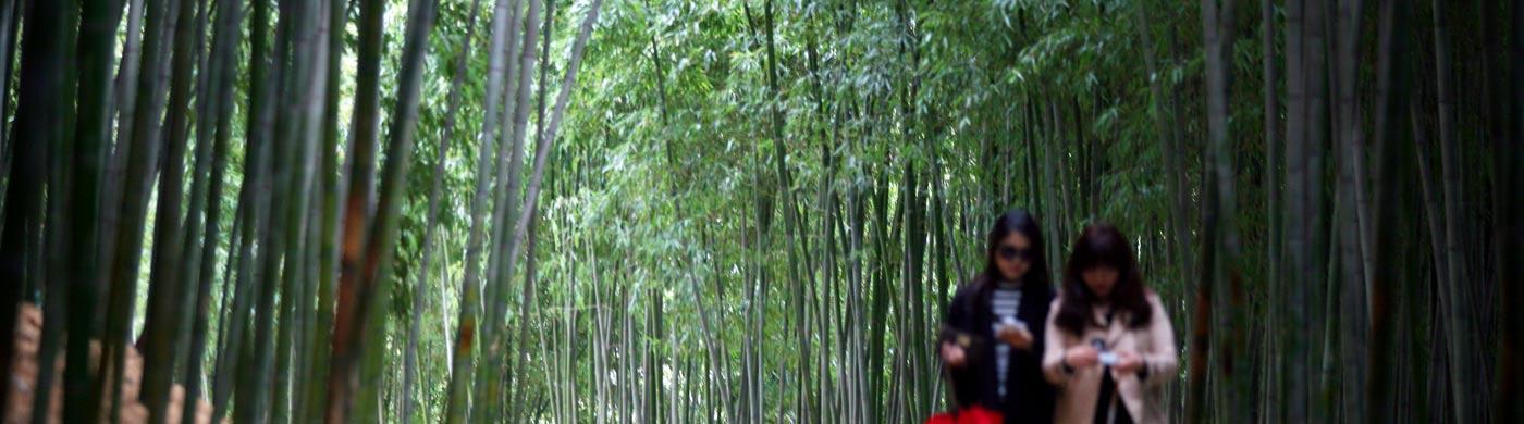 녹음이 우거진 숲의 싱그러움 사진