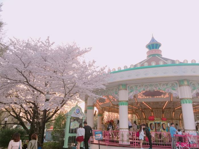 Festival des cerisiers à E-world 2019 (이월드 별빛벚꽃축제 2019)