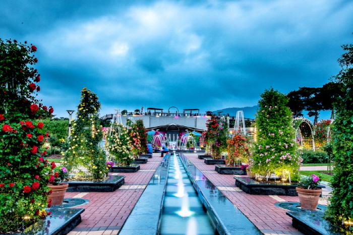 Международный фестиваль роз в уезде Коксон (곡성 세계장미축제)5