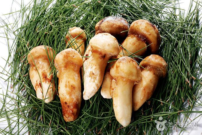 ヌティナムチプ(느티나무집)