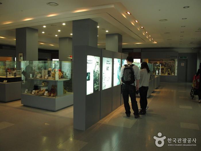 Teddy Bear Museum (제주 테디베어뮤지엄)